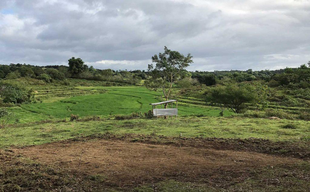 Manila Family Farm