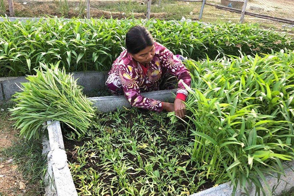 School Nutritious Gardens Cambodia