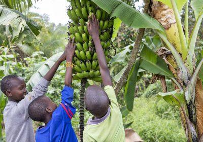Orchard Kenya