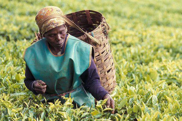 Kenya Farmer